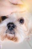 被采取的逗人喜爱的爱犬 库存图片