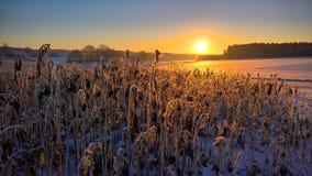 被采取的阵营冷kruger早晨国家公园照片satara skukuza日出是冬天 免版税图库摄影