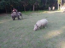 被采取的chitwan国家尼泊尔公园照片日落 库存照片