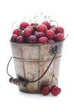 被采摘的樱桃新鲜的金属桶 免版税库存照片