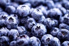 被采摘的蓝莓新鲜 库存图片