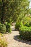 被铺的小径在庭院里 免版税库存照片