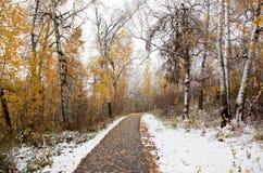 被铺的路在森林 图库摄影