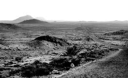 被铺的路在沙漠 免版税图库摄影