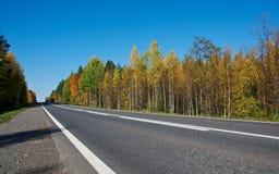 被铺的路在秋天森林里 图库摄影