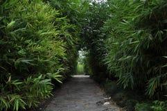 被铺的路在竹森林里 免版税库存图片