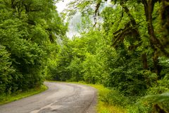 被铺的路通过一个密集的森林 免版税库存照片