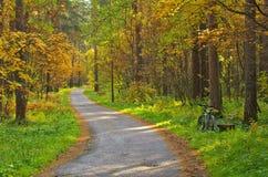 被铺的道路在秋天森林里 免版税库存照片