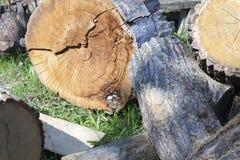 被锯的木头的树干 免版税库存照片