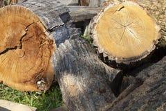 被锯的木头的树干 免版税库存图片