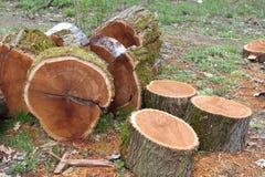 被锯的木头 库存照片