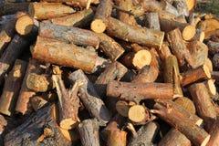 被锯的木柴 免版税库存图片