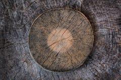 被锯的木树桩纹理 库存图片