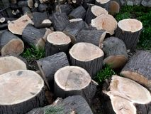 被锯的木头 库存图片