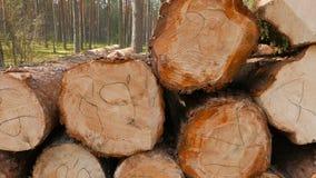 被锯的杉木日志 影视素材