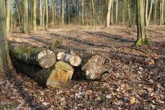 被锯的树干木头 免版税库存照片
