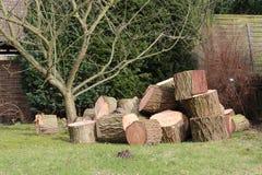 被锯的树干 免版税库存图片