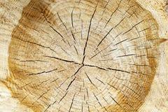 被锯的树干 库存照片