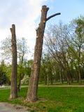 被锯的树的树干在公园 库存图片
