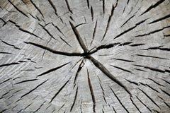 被锯的结构树 免版税库存照片