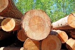 被锯的结构树  库存照片