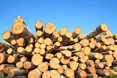 被锯的结构树  库存图片
