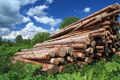 被锯的结构树  图库摄影