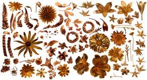 被镀金的真正的植物群零件 免版税库存图片