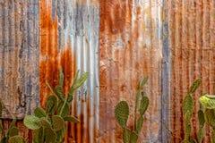 被镀锌的生锈的罐子房屋板壁风化了织地不很细用仙人掌 免版税库存照片