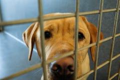 被附寄的狗 免版税图库摄影