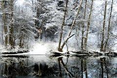 被限制的森林好的雪视图 免版税图库摄影