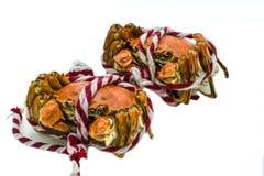 被隔绝的上海中国长毛的螃蟹,手套螃蟹蒸了,秋天冬天12月季节 免版税图库摄影
