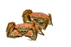 被隔绝的上海中国长毛的螃蟹,手套螃蟹蒸了,秋天冬天12月季节 库存图片