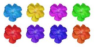 被隔绝的五颜六色的花 库存照片