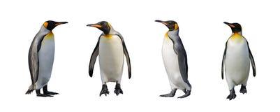 被隔绝的企鹅国王 库存照片