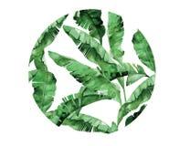 被隔绝的传染媒介水彩绿色植物叶子deocration 库存例证