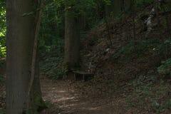 被隔绝的公园长椅在森林中间和围拢由大树 免版税图库摄影