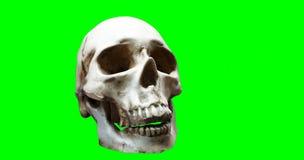 被隔绝的头骨绿色  免版税库存图片