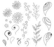 被隔绝的套传染媒介叶子,花被画的概述,卷曲 向量例证