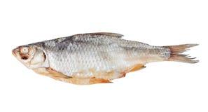 被隔绝的干vobla鱼 库存照片