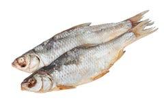 被隔绝的干vobla鱼 免版税库存图片