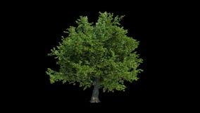 被隔绝的树生长 库存例证