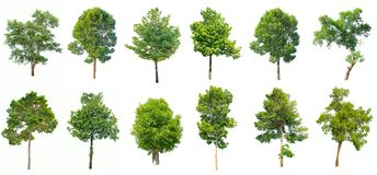 被隔绝的树的汇集在白色背景的 库存图片