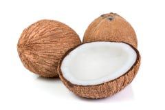 被隔绝的椰子 免版税库存图片