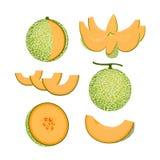 被隔绝的橙色瓜果子 库存图片