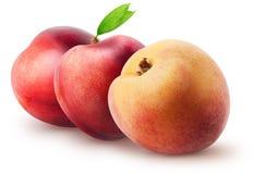 被隔绝的油桃 两个整个油桃果子和桃子与在白色背景隔绝的叶子与裁减路线 库存图片