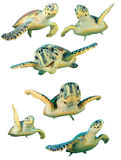 被隔绝的海龟 免版税图库摄影