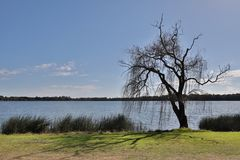 被隔绝的湖树 图库摄影