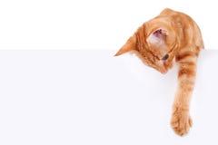 被隔绝的猫白色标志 库存图片