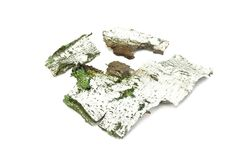 被隔绝的生苔白桦树皮 免版税图库摄影